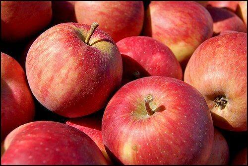 Δοκιμή μεγάλης κλίμακας για την αξιολόγηση της επίδρασης του Amino 16 στη βελτίωση της ποιότητας και την απόδοση στα μήλα